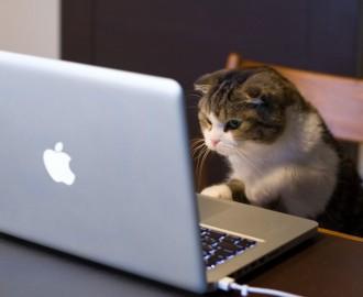 gato usando computadora